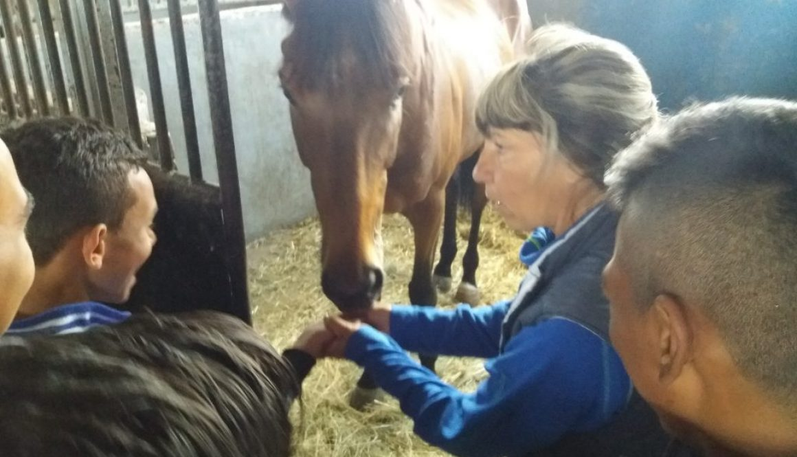 Practical skills with horses