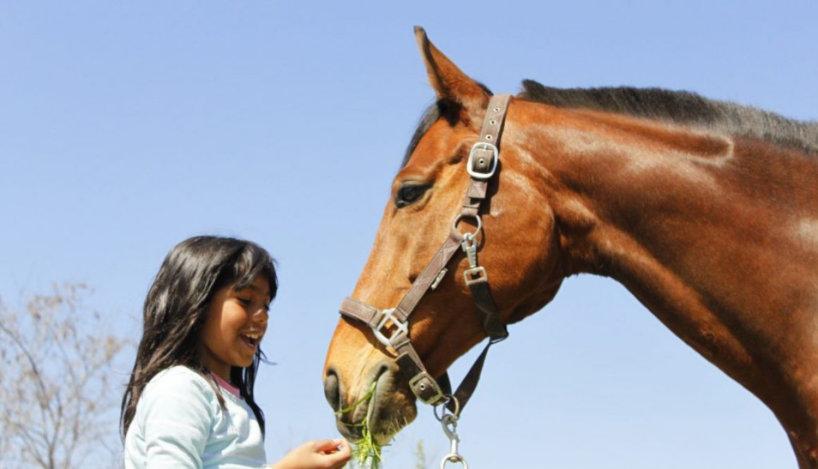 Equestrian Sports and Social Skills